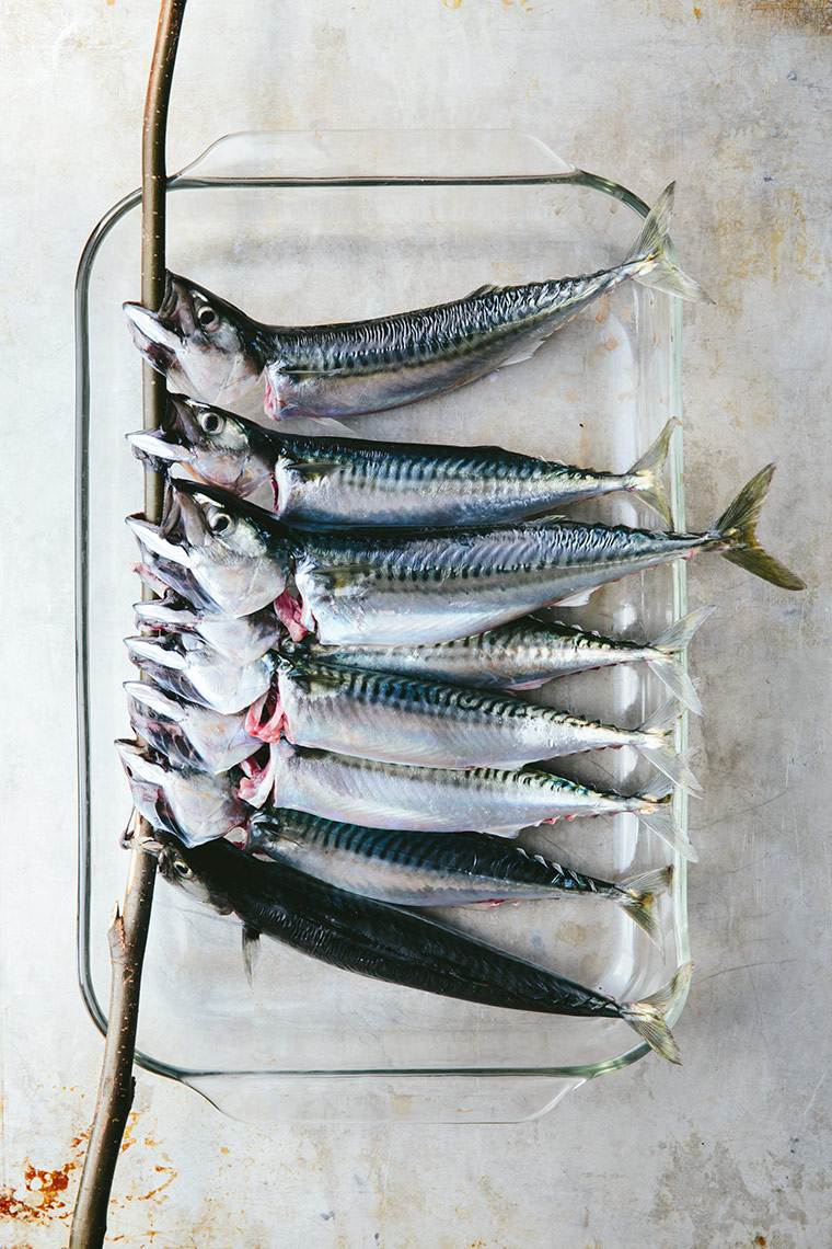 Mackerel - Maine - Kristin Teig