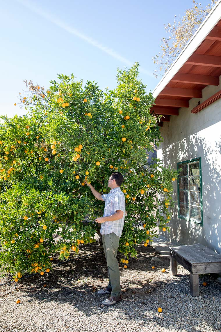 Kristin Teig Photography | Citrus grove, Ojai